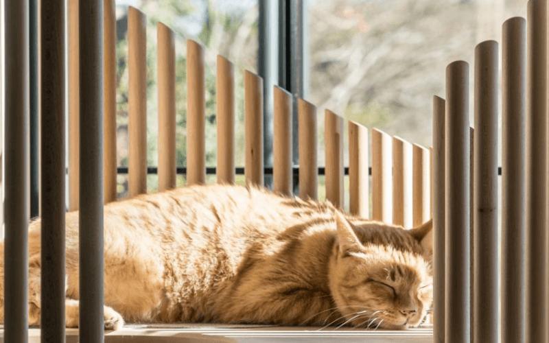 kot drapie meble - wygrzewanie się kota na drapaku